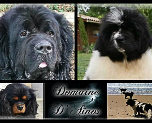 Domaine d'Ainos. Sonia Fort.